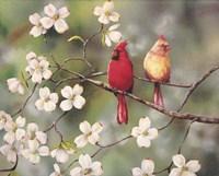Cardinals Fine Art Print