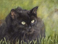 Black Cat Fine Art Print