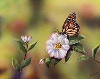 Monarch With Camellia Fine Art Print
