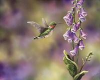 Spring Hummingbird Fine Art Print
