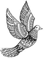 Dove Fine Art Print