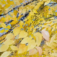 Golden Leaves Fine Art Print
