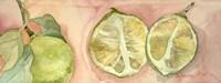 Limes In Sicily Fine Art Print