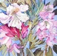 Rhododendron I Fine Art Print