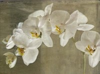 Painted Orchid Fine Art Print
