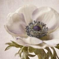 Linen Flower I Fine Art Print