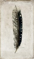 Feather 2 Fine Art Print