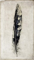 Feather 3 Fine Art Print