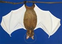 Bat Fine Art Print