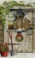 Christmas Donkies Fine Art Print
