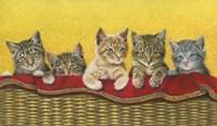 Five Kittens In Basket Fine Art Print
