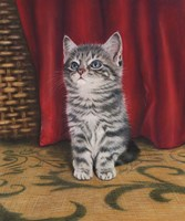 Grey Kitten And Red Curtain Fine Art Print