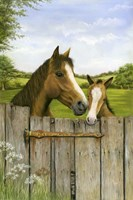 Mother And Foal Fine Art Print