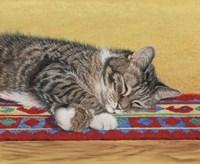 Sleepy Sam Fine Art Print