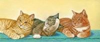 Tabbies Fine Art Print