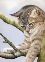 Tabby In Tree Fine Art Print