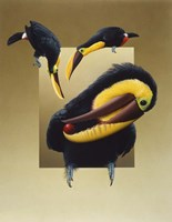 Chestnut-Mandibled Toucans Fine Art Print