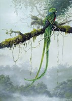 Resplendent Quetzal Fine Art Print