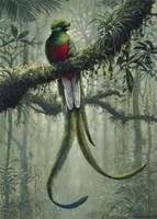 Resplendent Quetzal 2 Fine Art Print
