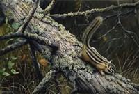 Eastern Chipmunk Fine Art Print