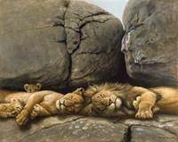Two Lions Head To Head Fine Art Print