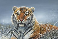 Tiger In Snow Fine Art Print