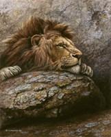Lion Male 2 Fine Art Print