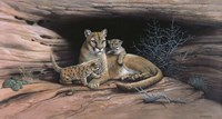 Mountain Lions Fine Art Print