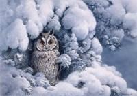 Long-Eared Owl Fine Art Print