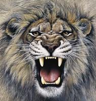 Lion Fine Art Print