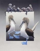 Bluefooted Boobies And Marine Iguanas Fine Art Print