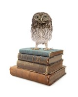 Owl And Books Fine Art Print