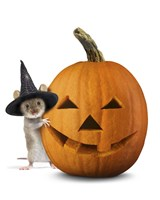 Halloween Mouse Fine Art Print