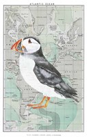 Atlantic Puffin Fine Art Print