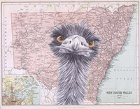 Emu Fine Art Print