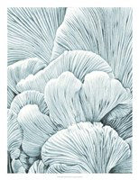 Mushroom Gills I Fine Art Print