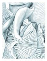 Mushroom Gills III Fine Art Print