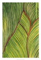 Tropical Crop II Fine Art Print