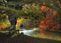 Autumn Reverie Fine Art Print