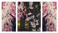 Cherry Blossom Triptych Fine Art Print
