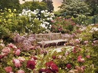 The Rose Garden Fine Art Print