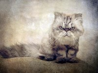 Cranky Cat Fine Art Print