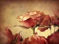 Gilded Roses Fine Art Print