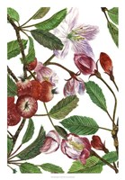 Malus Melliana I Fine Art Print