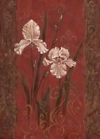 Iris Design Fine Art Print