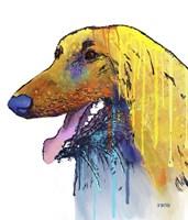 Afghan Hound 2 Fine Art Print