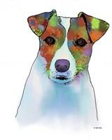 Jack Russell Terrier 1 Fine Art Print