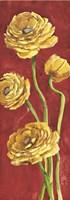 Ranuncoli in Rosso Fine Art Print