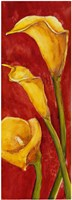 Calle in Rosso Fine Art Print