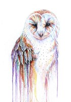 Barred Rainbow Owl Fine Art Print